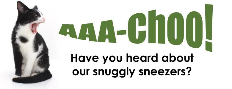 AAA-Choo Kitties