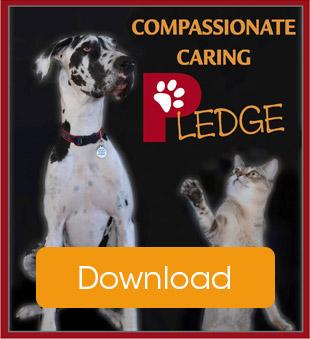 caring pledge thumbnail