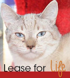 Lease for Life