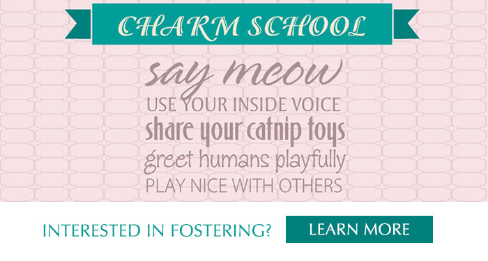 Charm School Banner