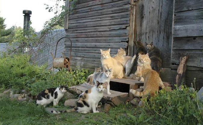 Barn Cat Program
